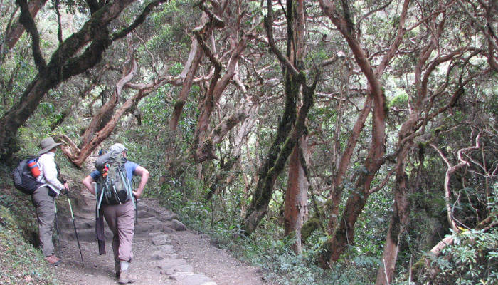 Inca_Trail_Trek_Cloud_Forest