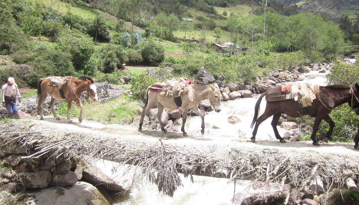 trekking-mules-choquequirao-trek