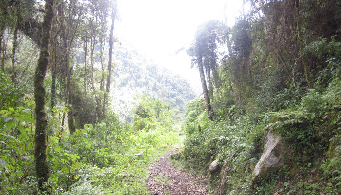 inca-jungle-trek-lush-vegetation