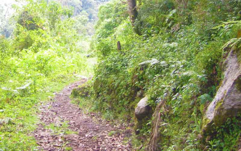 new inca trail discovered